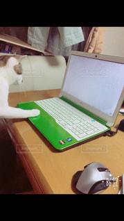 猫,パソコン,PC,作業中