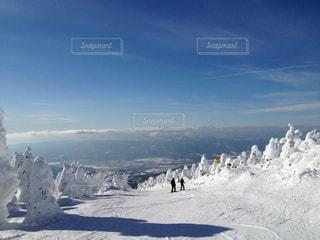白,青,スキー,スノボ,樹氷,ウインタースポーツ