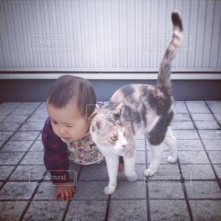 子ども,猫,動物,ペット,人物,ネコ