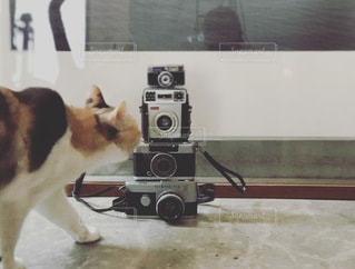 鏡の前に立っている犬がカメラのポーズをとるの写真・画像素材[3417301]