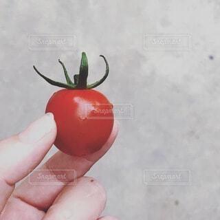食べ物,トマト,野菜,食品,食材,フレッシュ,ベジタブル