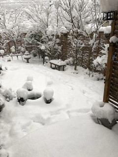 雪,庭,大雪,真っ白,わが家