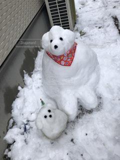 犬,雪,庭,仲良し,ペット,大雪