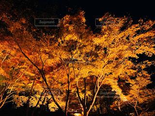 香嵐渓の写真・画像素材[1627557]