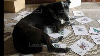 犬,黒,ゴールデンレトリバー,夢,ポジティブ,ひらがな練習,僕も入れて