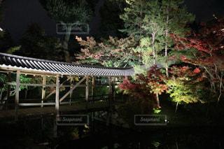 紅葉,京都,神社,もみじ,景色,イルミネーション,寺,ありがちの