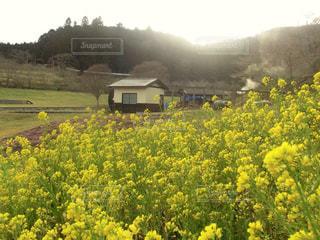 自然,風景,空,公園,夕日,菜の花,山,景色,小屋,外,煙,菜の花畑,水車,室外,風車小屋