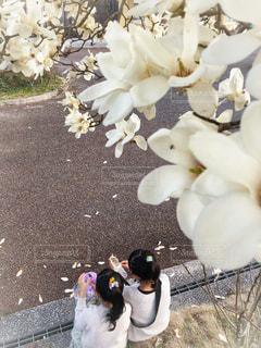 白木蓮の木の下での写真・画像素材[1873981]