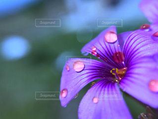 花,水,紫,水滴,水玉,加工