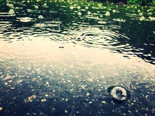 水域の写真・画像素材[2219008]