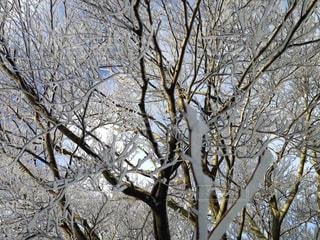 風景,雪,屋外,白,雪景色,景色,旅行,ホワイト,インスタ映え,レジャー・趣味