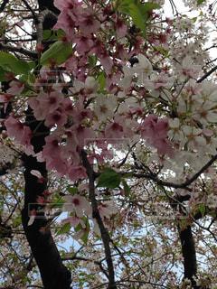 空,春,桜,お花見,旅行,ハイキング,インスタ映え