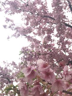 空,春,お花見,旅行,インスタ映え