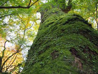 森林,屋外,樹木,未来,夢,草木,ブナ,目標,山腹