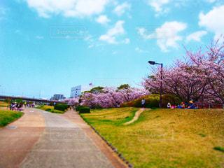 春,桜,赤,青空,花見,山,景色,サクラ,さくら