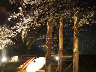 夜桜の写真・画像素材[1846885]