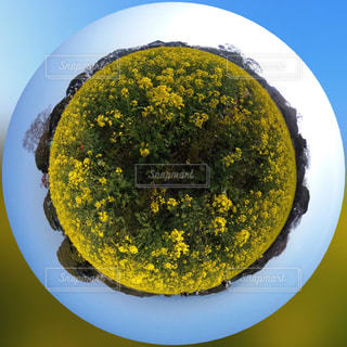 春,森林,青空,黄色,菜の花,景色,360,360度カメラ