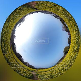 春,森林,青空,黄色,菜の花,景色,幸せ,イエロー,黄,草木,360,yellow,360度カメラ