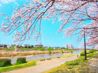 春,森林,花見,夜桜,サクラ,樹木,幸せ,さくら