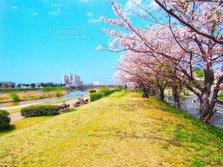 春,森林,青空,花見,夜桜,サクラ,樹木,幸せ,さくら