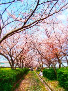 風景,空,公園,春,屋外,青空,葉,花見,夜桜,景色,サクラ,草,樹木,新緑,さくら