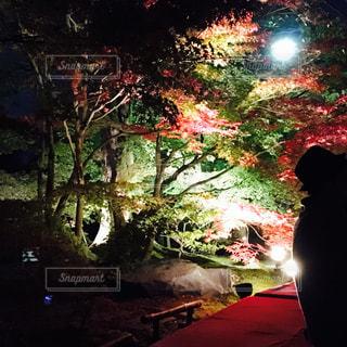 秋,夜,紅葉,鮮やか