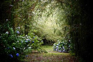 竹林の静けさの写真・画像素材[4499502]