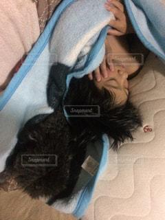 遊び疲れてコタツで昼寝の写真・画像素材[1622451]