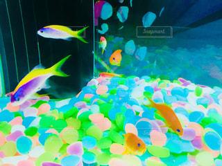 カラフルな熱帯魚の写真・画像素材[1540003]