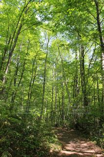 森の中での写真・画像素材[2265893]