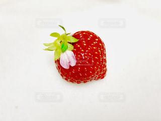 花,ピンク,赤,いちご,フルーツ,果物,果実