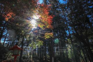 紅葉,森林,木漏れ日,鮮やか,グラデーション,英彦山,英彦山神宮周辺