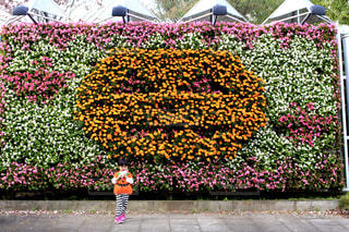 お花の前に立っている女の子の写真・画像素材[1582234]