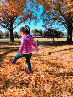 落ち葉で遊ぶ子供の写真・画像素材[1637691]