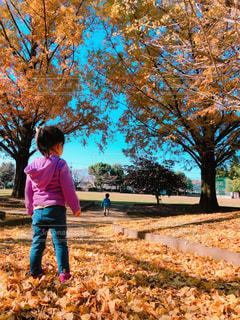 落ち葉の上に立っている子供の写真・画像素材[1637694]