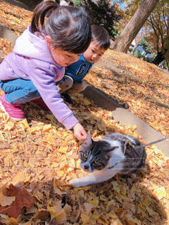 猫を触る女の子と男の子の写真・画像素材[1637701]