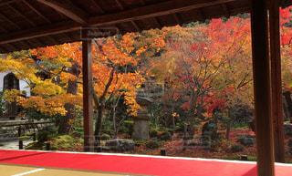 秋,紅葉,京都,カラフル,もみじ,一乗寺,モミジ,詩仙堂