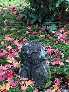 自然,秋,紅葉,もみじ,モミジ