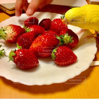 食べ物,鳥,家,いちご,フルーツ,果物,くだもの,ダイニング,セキセイインコ,インコ,小鳥,旬