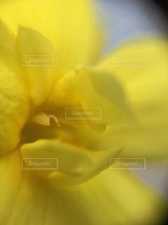 花,春,黄色,日差し,幸せ,イエロー,yellow,マクロ
