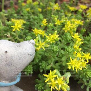 花,春,庭,黄色,幸せ,イエロー,yellow