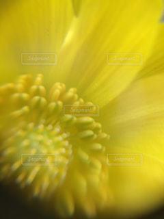 花,春,庭,黄色,幸せ,イエロー,yellow,マクロ