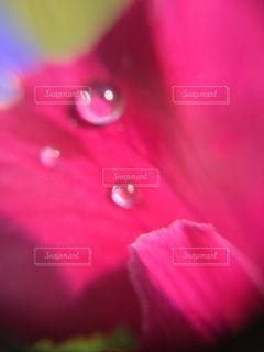 花,雨,水滴,雨上がり,初夏,梅雨,雨粒,雨の日