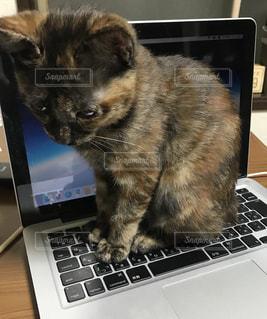 ノート パソコンのキーボードの上に座って猫の写真・画像素材[1546235]