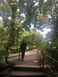 男性,自然,木,緑,後ろ姿,沖縄,影,人物,背中,人,後姿,マイナスイオン,ガンガラーの谷,空気