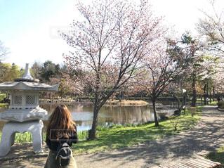 女性,自然,風景,公園,花,桜,屋外,湖,後ろ姿,北海道,樹木,人物,背中,人,後姿,草木