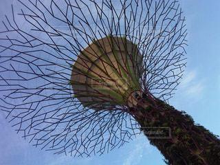 屋外,光,樹木,旅行,旅,シンガポール,海外旅行,日中