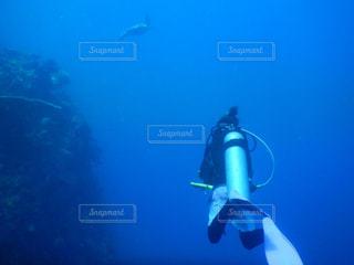自然,海,スポーツ,水中,ウミガメ,ダイビング