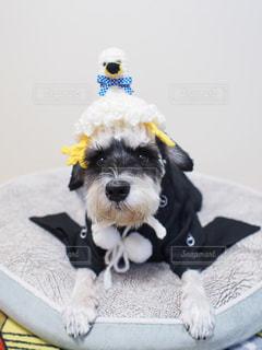 犬 - No.298340