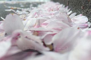 花の写真・画像素材[422288]